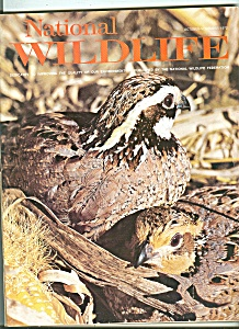 National wildlife -   October, November 1972 (Image1)