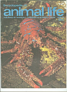 Encyclopedia of animal  life -  Part 81  - 1974? (Image1)
