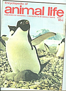 Encyclopedia of animal life - Part 1   1974??? (Image1)