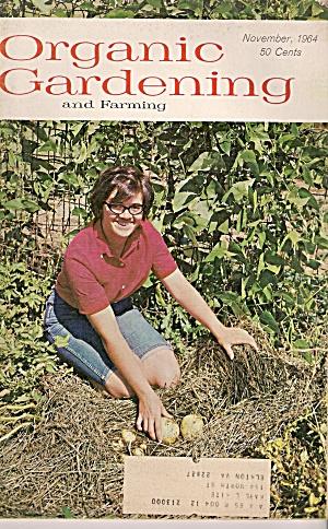 Organic Gardening -  November 1964 (Image1)