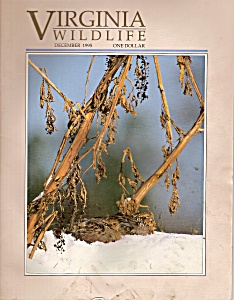 Virginia wildlife -=  December 1995 (Image1)