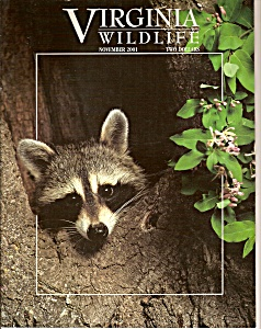 Virginia Wildlife - November 2001 (Image1)