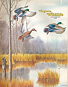 Virginia Wildlife - December 1979 (Image1)