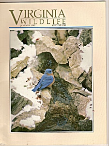Virginia Wildlife -  January 1992 (Image1)