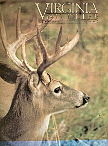 Virginia Wildlife -  November 1983 (Image1)