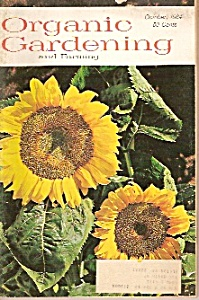 Organic Gardening and Farming -  October 1964 (Image1)