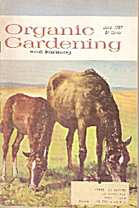 Organic Gardening and farming -June 1967 (Image1)