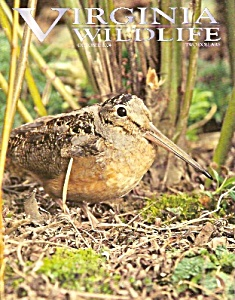 Virginia Wildlife magazine - October 2004 (Image1)