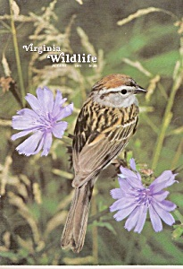 Virginia Wildlife magazine-  August 1981 (Image1)