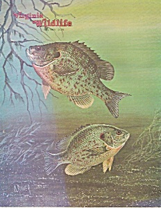 Virginia wildlife magazine- May 1981 (Image1)
