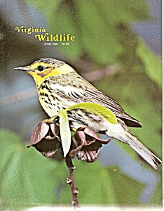 Virginia Wildlife - June 1980