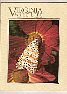 Virginia Wildlife -  August 1991 (Image1)