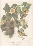 Click to view larger image of AUDOBON BALTIMORE ORIOLE COLOR PRINT (Image1)