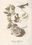 Click to view larger image of AUDOBON AMERICAN REDSTART COLOR PRINT (Image1)