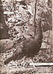 Click here to enlarge image and see more about item B0111: Virginia Wildlife - Nov. 1957
