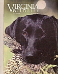 Virginia Wildlife - October 1988