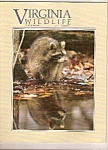 Virginia Wildlife -  October 1990
