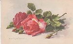 Click here to enlarge image and see more about item KLEIN011: CATHERINE KLEIN~ROSES~POSTCARD~1910~STUDY