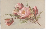 Click here to enlarge image and see more about item KLEIN013: CATHERINE KLEIN~FLOWERS~POSTCARD~~STUDY
