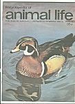 Click here to enlarge image and see more about item M5220: Encyclopedia  of animal life -  Pate 95     1974?