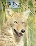 Virginia Wildlife -  November 1986