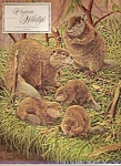 Virginia Wildlife -   August 1971