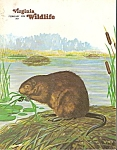 Click here to enlarge image and see more about item M7445: Virginia Wildlife -  February 1978