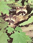 Virginia Wildlife - August 1982