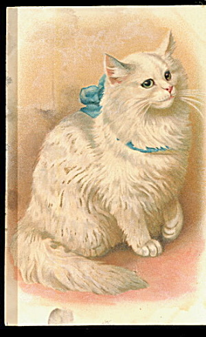 Embossed White Persian Cat 1908 Postcard