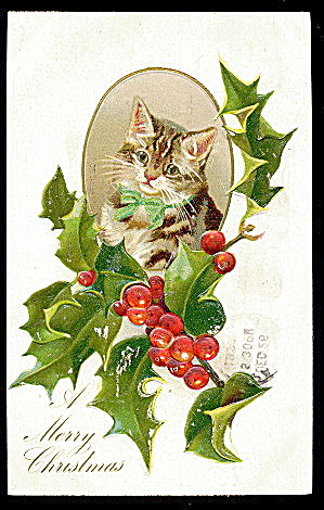 Christmas Cat/kitten In Holly 1908 Postcard