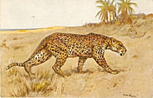 1907 Signed Leopard Wild Animals Postcard (Image1)