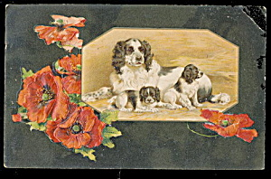 Winsch Dog with Puppies 1907 Postcard (Image1)