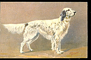 Great 1920 Muller Spaniel Dog Postcard