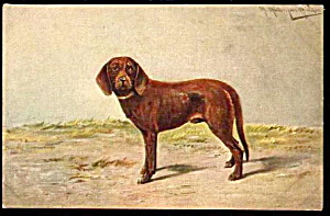M Muller Brown Spaniel? Dog 1907 Postcard (Image1)