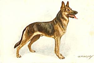 Vintage Alsatian Wolfhound Dog Postcard, Hollyer (Image1)