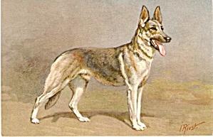 'Alsatian Wolfhound Dog' Vintage Postcard,  J Rivst (Image1)
