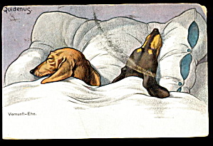 1907 TSN Germany Daschund Dogs Postcard (Image1)