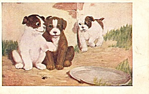 'Eavesdropping' Puppies/Dogs Signed 1906 Postcard (Image1)