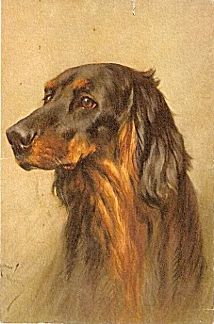Lovely Spaniel/Retriever Signed Dog's Head Postcard (Image1)