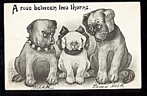 Great Phillips Artist Dogs 1907 Postcard (Image1)