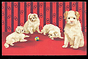 1907 White Puppies/dogs Vintage Postcard