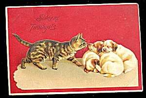 1907 Cat With White Puppies/dogs Vintage Postcard