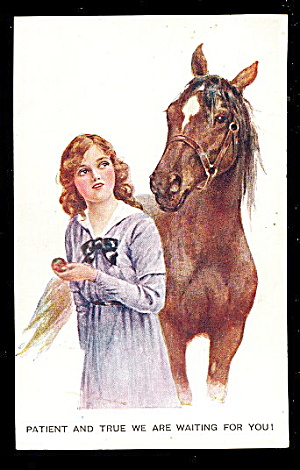 Horse With Woman 1907 Postcard