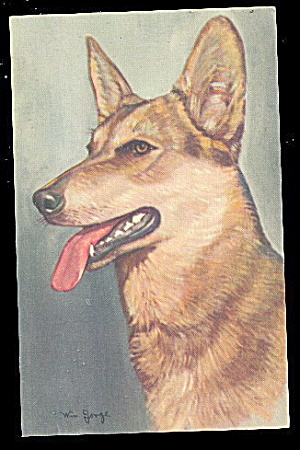 Vintage W Jorge German Shepherd Dog Postcard