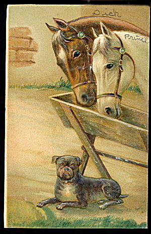 1907 Horses With Dog (Boxer) Postcard
