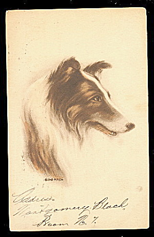 Lovely Collie Head Dog Postcard -artist