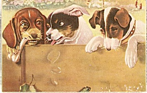 Great Artist Puppies/Dogs Vintage Postcard (Image1)