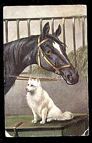 Horse Visiting Dogs Signed 1908 Postcard