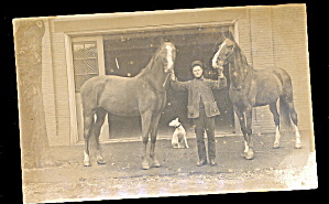 Real Photo Large Horses 1907 Postcard