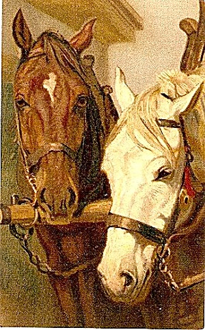 Two Horses - Brown & White Artist 1909 Postcard
